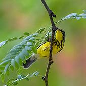 Fall Bird Migration 2021
