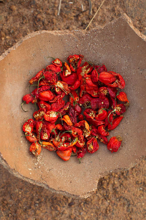 Scotch Bonnet peppers drying in the village of Manyoro, in the Bolgatanga municipality of North Eastern Ghana...Ghana 21 January 2012.