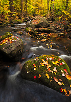 A wide angle perspective accentuates these freshly fallen leaves and moss that decorate the in-stream boulders of a small creek in Groton State Forest, Vermont