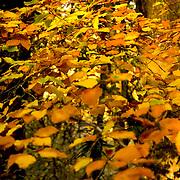 Autumn leaves<br />
