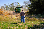 30 SEPTEMBER 2020 - WOODWARD, IOWA: A member of a combining crew walks through the cornfield on Lambert family land in Woodward. Kevin Lambert said it would take nearly twice as long to combine this year's corn compared to last year's because of damage to fields caused by the derecho wind storm that roared through central Iowa in August. The derecho wind storm damaged more than 550,000 acres of Iowa cornfields. In addition to derecho damage, Iowa farmers are wrestling with drought related damage. A persistent drought in central Iowa has stunted corn plants and reduced yields. Because of the unusually dry weather, this year's harvest is three weeks ahead of last year's and nine days ahead of average.        PHOTO BY JACK KURTZ