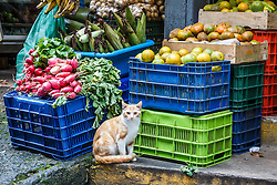 Cat in farmer's market, San Ramon, Alajuela, Costa Rica, Costa Rica.Costa Rica.