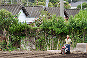 An older Japanese man ploughing a field in a small farm near Yamato, Kanagawa, Japan. Thursday September 10th 2020