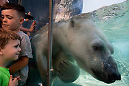 31 MAY 2017 -- ST. LOUIS -- Kali, the polar bear at the Saint Louis Zoo's McDonnell Polar Bear Point exhibit, swims past admirers pressed up against the viewing windows Wednesday, May 31, 2017 at the zoo in St. Louis.<br /> <br /> Photo © copyright 2017 Sid Hastings.