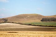 Distant sheep chalk scarp slope Knap Hill, Vale of Pewsey, Alton Priors, Wiltshire, England, UK