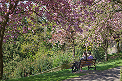 © Licensed to London News Pictures. 20/04/2015. Bristol, Avon, UK. Two women sitting on a bench underneath blossoming trees enjoying the sunny weather in Bristol today, 20th April 2015. The South West of England is set for more warm temperatures and plenty of sunshine this week. Photo credit : Rob Arnold/LNP