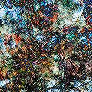 Digitally enhanced image of a flowering Australian Coral Gum tree (Eucalyptus torquata)