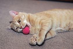 Cat Playing With Ball