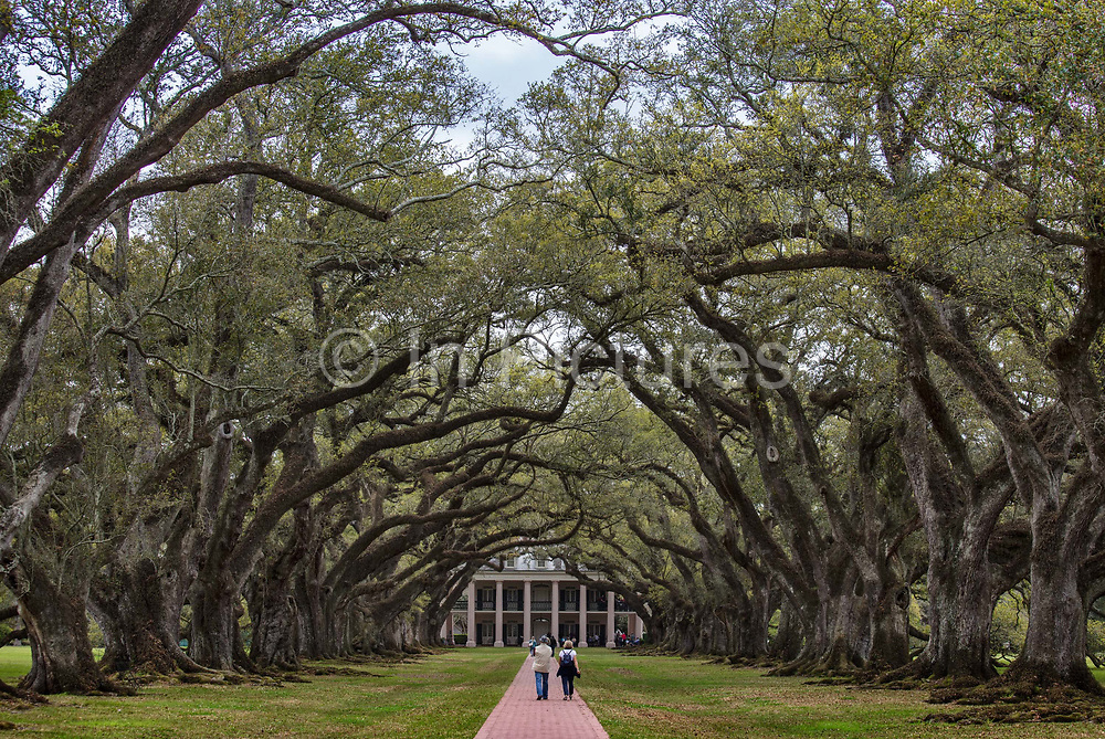 Avenue of oaks leading to the Oak Alley Plantation, a historic plantation located on the west bank of the Mississippi River on 10th April 2020 in Vacherie, Louisiana, United States. The grand homes in this area were built by immensely wealthy sugar planters during the 30 years prior to the Civil War. They epitomize the conspicuous consumption lifestyle, based on slavery, characteristic of the so-called Gold Coast during that period and were the absolute apex of the Greek Revival style in Louisiana.