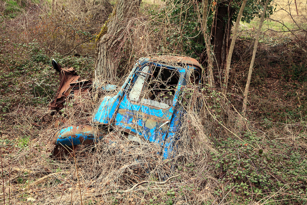 an abandoned rusting truck wreck in the woods