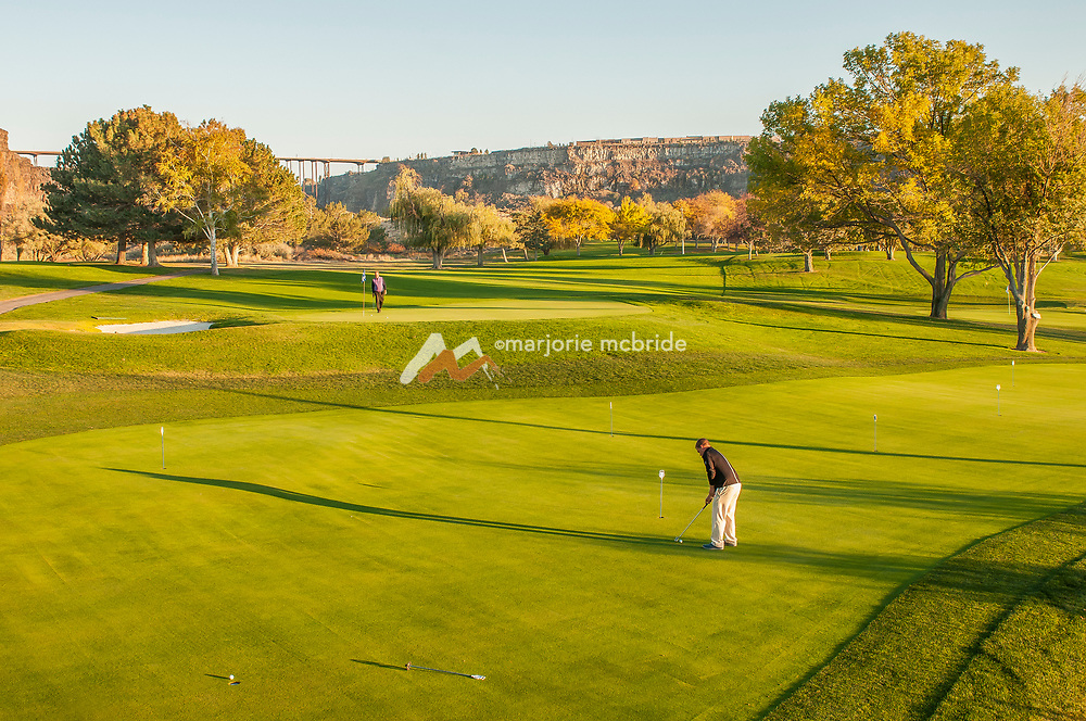 Golfer putting on the practice green in the Snake River Canyon at Blue Lakes Country Club in Twin Falls, Idaho.