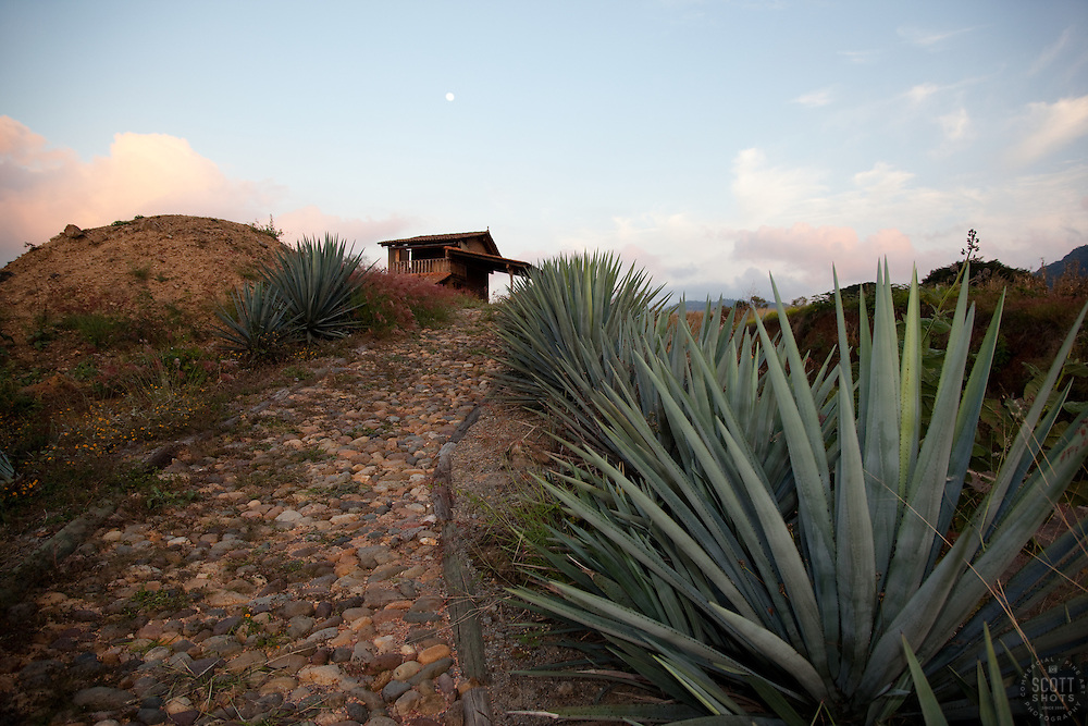 """""""Full Moon Over Agave""""- This sunset, moon and agave plant were photographed at Parador San Sebastian, Mexico."""