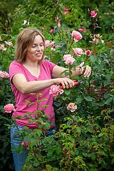 Deadheading roses to ensure longer flowering season