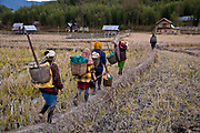 A group of Apatani tribal women after having re-contoured the bare rice fields return to their village  to prepare dinner. Most villagers own small plots of land which are mainly used for rice growing and usually  friends and neighbours help one another plough and till the land for the coming growing season. Hijja Village, Arunachal Pradesh, India.