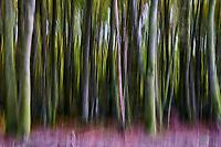 France, Côte d'Or (21), parc naturel régional du Morvan, sentier de randonnée entre Bibracte et Alesia // France, Côte d'Or, Morvan park, trekking path between Bibracte and Alesia