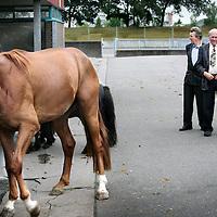 Nederland.Utrecht.Veemarkt.27 juli 2005.<br /> Paardenhandelaren bekijken kritisch een paard die te koop is aangeboden tijdens de paardenmarkt op de Veemarkt.Keuring.Paardenhandel.Boeren.<br /> Horse market in Utrecht in 2005. Horse dealers estimating the quality of a horse.