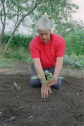 Man planting tree on allotment,