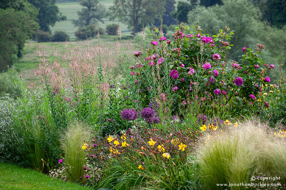 Linaria 'Peachy', Allium 'Firmanent' and Hemerocallis 'Corky'<br /> - daylily - in the borders at Pettifers, Oxfordshire