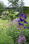 Ousden House, Dlephinium in Herbacious border July