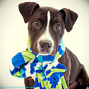Dog photographer takes photos of shelter dogs to get them adopted faster.