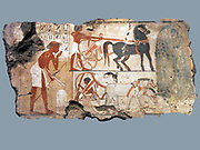 Nebamun was the accountant in charge of grain at the great temple at Amun at Thebes (modern Karnak).  This scene from his tomb-chapel shows officials inspecting fields.  Nearby two chariots for the party of officials wait under the shade of a sycomore-fig