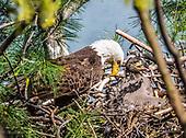 Eagles, NJ, USA