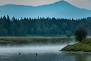 Canadian geese swim on the Snake River at Oxbow Bend as steam rises from the water during dawn at the Grand Teton National Park in Moran, Wyoming.