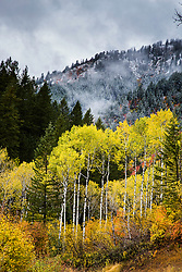 Saying goodbye to Autumn.  the all to brief golden color of an Idaho autumn is but a blink of an eye between the roasting hot of summer and the snows of winter. A time of golden treasure.