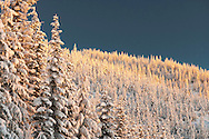 morning alpenglow adds warm light to a snow covered coniferous forest on the Mount Tahoma Trails cross country ski and snowshoe trail system in the Cascade Mountain Range near Mount Rainier, Washington state, USA