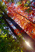 Fall colours in a western forest