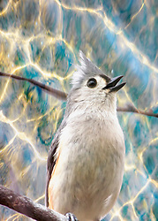 A Tufted Titmouse against a rippled pastel backdrop