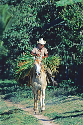 Man On Horse With Grasses