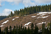 Clear Cut Forestry on Mount Washington, Vancouver Island, British Columbia   Photo: Peter Llewellyn