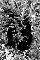 Reportage sul comune di Alessano per il progetto propugliaphoto..Una voragine si apre nel suolo..Macurano è un villaggio rupestre considerato un luogo di scambio e commercio, simbolo della cultura dell'olio per la presenza ad oggi di alcune tracce nelle grotte e di frantoi funzionanti nella zona. L'insediamento è caratterizzato da una serie di grotte sia naturali che scavate nel calcare, cisterne per la raccolta dell'acqua, sistemi di canalizzazione che scendono da Montesardo, viottoli, scalette e vie più larghe con antiche tracce di carri..Si ritiene che in questo sito, un vero e proprio centro abitato ben organizzato distante circa quattro km dalla costa, i monaci basiliani scappati dall'oriente in seguito alla lotta iconoclasta, trovarono rifugio e si dedicarono all'agricoltura..L'area del villaggio rupestre fu sicuramente sfruttata in epoche successive, lo prova l'esistenza di ben tre masserie di cui una fortificata e i resti di una serie di costruzioni che fanno parte dei numerosi esempi di architettura rurale presenti in questo territorio. .Il complesso masserizio, denominato Macurano, edificato probabilmente nel Cinquecento include la Masseria di Santa Lucia e la cappella di Santo Stefano. La Masseria è dominata dal nucleo originario, ovvero dalla torre cinquecentesca coronata da beccatelli a sostegno del parapetto aggettante del terrazzo sommitale.