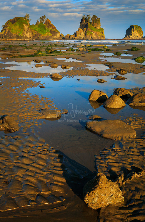Pools of water at low tide, Point of the Arches, Olympic National Park