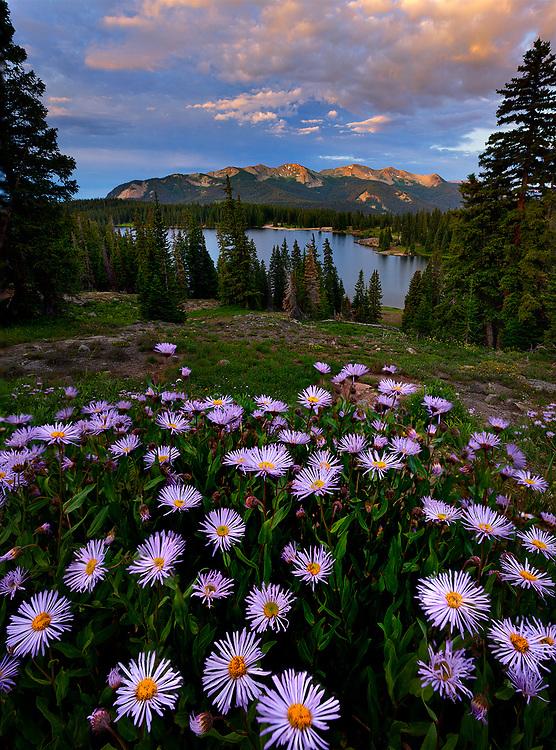 Purple Fleabane flowers above a mountain lake.