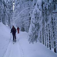 Ulrich Geertz and David Quammen cross country ski in the Carpathian Mountains near Zarnest.