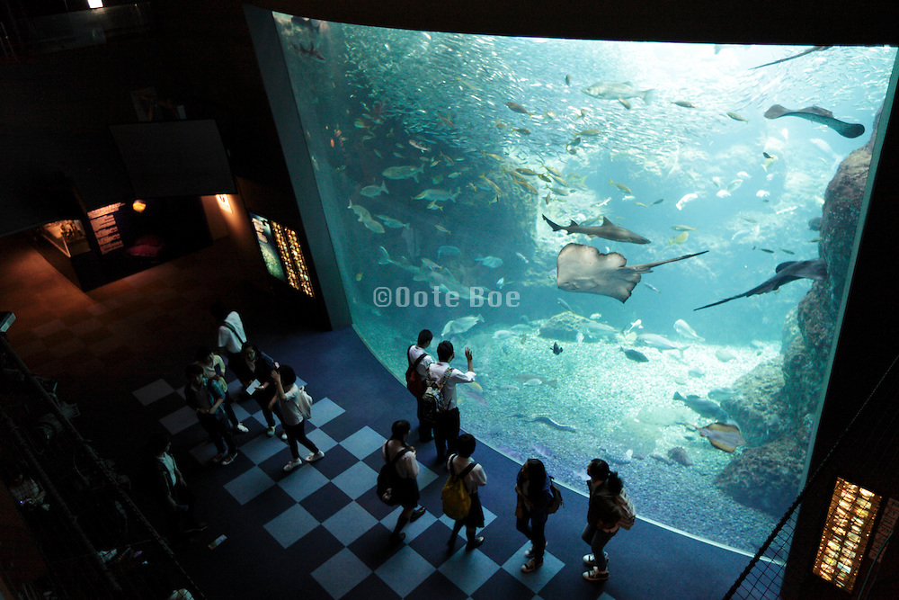 school group teenagers looking at various type of fish in large aquarium