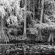 Caddo Lake - Texas