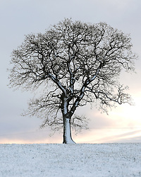 © Licensed to London News Pictures. <br /> 29/01/2015. <br /> <br /> Glaisdale, United Kingdom<br /> <br /> A lone tree stands in a field near Glaisdale in North Yorkshire following overnight snow. A wintery blast causing extremely cold weather is expected to cause some disruption over the next few days.<br /> <br /> Photo credit : Ian Forsyth/LNP