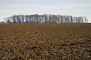 Ploughed field and copse, Gloucestershire, United Kingdom.