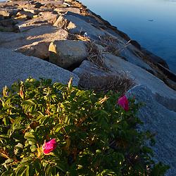 A breakwater in Provincetown, Massachusetts.