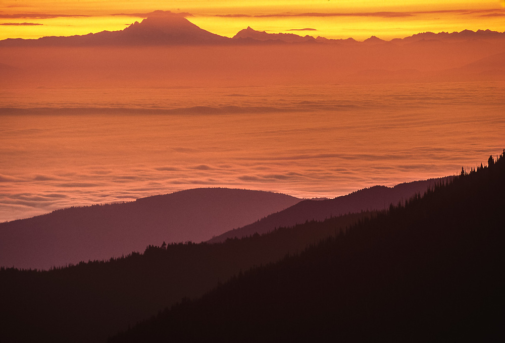 View toward Mount Baker from the Obstruction Point area, sunrise, Olympic National Park, Washington, USA