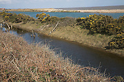The Denes, lagoon, Benacre, national nature reserve, Suffolk, England