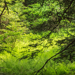 Benton, PA, USA - June 15, 2013: Green forest floor in the Ricketts Glen State Park.