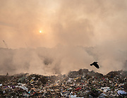 A visit to one of the main garbage dump. With 15 millions population in 2019 and growing, the city of Calcutta is a typical case of expansion through uncontrolled urbanization.