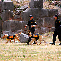 South America, Peru, Cusco. Peruvian police walking police dogs at the fortress of Sacsayhuaman, on the outskirts of Cusco in the Andes.