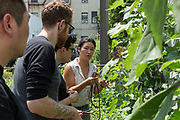 Queens, NY - 28 July 2019. Drew Shives, Amir Dholakia, and Matt Taber, partners in Beta, checking out some long beans at Choy Division, a backyard farm in Astoria run by Christina Chan, and which specializes in Asian vegetables .