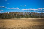 Recently plowed field under blue sky on warm spring day with an edge of a forest behind it, near Mazgramzda, Kurzeme, Latvia Ⓒ Davis Ulands   davisulands.com