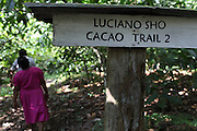 """Luciano Sho (front), 52, and Eugenia Sho, 48, cacao growers from San Antonio, walk through the family's cacao trail number 2. Mr. Sho switched from rice farming in 2004 and joined the TCGA in 2005. He now has 17,000 cacao trees and is one of the organization's most successful members. """"Thanks to the TCGA and Fair Trade for providing us great benefits. I have 13 children and many have been granted Fair Trade scholarships. I am very proud to belong to the TCGA."""" Toledo Cacao Growers' Association (TCGA), San Antonio, Toledo, Belize. January 28, 2013."""